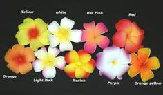 Image result for illustrations of hawaiian flowers