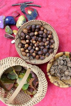 """Sorting acorns & leaves - if you're going to save acorns for decorations or crafts indoors, you'll need to bake them at 350 degrees F for 15 minutes. Otherwise you will find that there is a small hole in the side of the acorn & a little maggot nearby after a week or two ("""",)"""