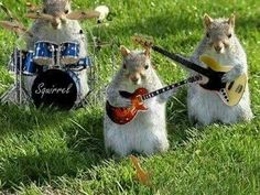 """This was in the hamster tag. Those are squirrels. The word """"squirrel"""" printed across the drum kit is a hint. Squirrel Pictures, Funny Animal Pictures, Baby Animals, Funny Animals, Cute Animals, Cute Squirrel, Squirrels, Squirrel Humor, Animal Antics"""