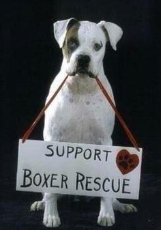 Support Boxer Rescue