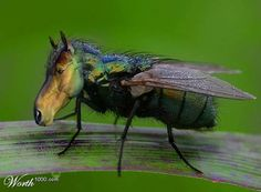Horse Vs Fly The Most Weird And Scary Photoshopped Hybrid Animals You'll Ever See • Page 5 of 6 • BoredBug
