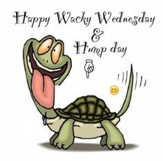 Wacky Wednesday quotes quote days of the week wednesday hump day wednesday… Wednesday Hump Day, Wednesday Greetings, Happy Wednesday Quotes, Good Morning Wednesday, Wednesday Humor, Wacky Wednesday, Good Morning Funny, Its Friday Quotes, Good Morning Good Night