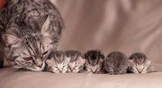 Voici 20 photos de chatons adorables avec leurs mamans ! C'est l'instant…