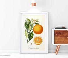 Tree Illustration, Botanical Illustration, Hops Plant, Herb Wall, Citrus Trees, Fruit Print, Botany, Original Image, Tree Branches