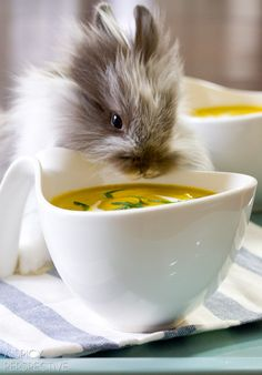 Bunny-Approved Creamy Carrot Soup Recipe with Leeks and Sauvignon Blanc | ASpicyPerspective.com #soup #spring #easter