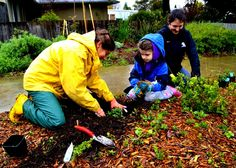 """""""Dedicated volunteers weather a rainy afternoon to expand the edible landscape at Pocket Park in Cotati, California, where a lawn has been transformed in perennial polyculture food forest. The park models a vibrant alternative to turf which uses 80% less water and provides food, medicine, wildlife habitat, beauty and on-going educational opportunities for the community."""" submission by Daily Acts #ZoomChange"""