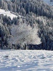 Beautiful Snow