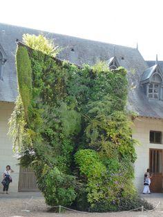 """""""Spirale végétale"""", création de Patrick Blanc, dans la cour des écuries du château de Chaumont-sur-Loire (41), juillet 2011, photo Alain Delavie"""