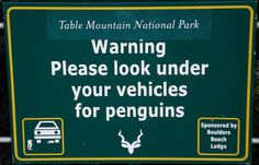 Road signs are usually boring, yet useful. Not in South Africa! Take a look at these 10 funny road signs in South Africa that are guaranteed to make you pay attention. A Funny, Hilarious, Funny Stuff, Funny Shit, Random Stuff, That Way, Just For You, Funny Road Signs, Table Mountain