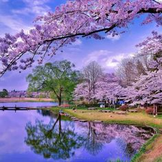 Landscape – Nature in bloom. Beautiful World, Beautiful Images, Landscape Photography, Nature Photography, Nature Wallpaper, Nature Scenes, Nature Pictures, Calming Pictures, Spring Pictures