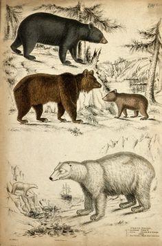 http://vintageprintable.com/wordpress/wp-content/uploads/2009/04/bears.jpg