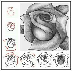 Rose drawing made easy