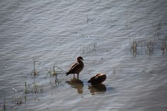 on the riverside - Florence Tuscany, Florence, My Photos, Birds, Animals, Animales, Animaux, Bird, Tuscany Italy
