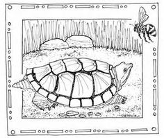 snapping turtle coloring pages bing images