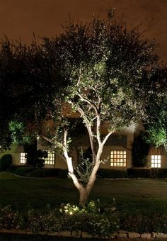 Light Up Tree Lamp.Tropical Floor Lamps Lighting And Ceiling Fans. Patio And Party Light Bulbs Triple Dipped . Home and Family Outdoor Garden Lighting, Outdoor Trees, Outdoor Plants, Landscape Lighting Design, Landscape Elements, Garden Lamps, Garden Trees, Outdoor Landscaping, Front Yard Landscaping