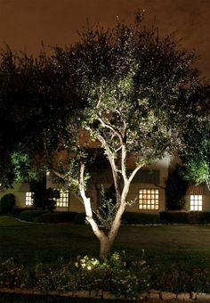 Moon Visions Lighting - Moon Visions LED Lamps
