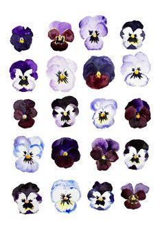 Spring Pansies - Art Print   Annetta Bosakova
