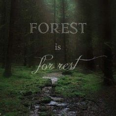 All Nature, Walking In Nature, Amazing Nature, Couple Look, Forest Quotes, Nature Quotes Adventure, Forest Bathing, Life Quotes Love, Daily Quotes