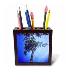 DYLAN SEIBOLD - PHOTOGRAPHY - SKY REACHING TREE - Tile #Pen Holders #gifts by 3dRose LLC  Link: