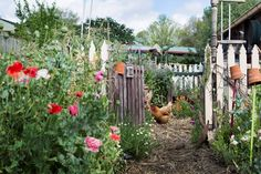 'Mrs Gunner's Garden' complete with picket fence, recreates a cottage garden of earlier times with Shirley poppies and pyrethrum, blue borage and orange wallflowers (Cheiranthus) at the entrance. Upturned terracotta pots atop stakes prevent eye injuries and double as plant labels.