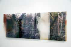Janet Laurence. 'Carbon Vein' 2008