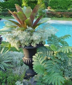 Poolside Urn filled with Bromeliad and Melianthus