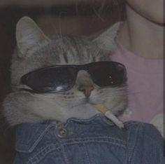 Baby Animals, Funny Animals, Cute Animals, Anime Animals, Cute Cat Wallpaper, Galaxy Wallpaper, Cat Icon, Cat Aesthetic, Aesthetic Dark