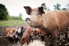 God's Dietary Laws: Are They For Today? - http://www.offthegridnews.com/2014/01/24/gods-dietary-laws-are-they-for-today/