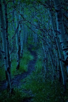 Silent forest. Calgary, Canada, by JJD-Photography, on flickr.