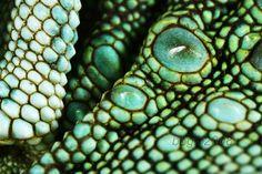 Closeup of Reptile Skin - Looks like beads