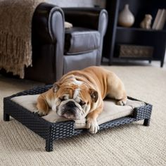 We've designed the Boomer & George Wicker Dog Bed with Cushion with not only your pet in mind, but also your décor. I Love Dogs, Puppy Love, Cool Dog Beds, English Bulldogs, Dog Houses, Mans Best Friend, Dog Treats, Best Dogs, Cute Puppies