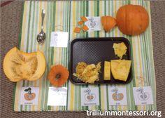Pumpkins in Our Montessori Class — trilliummontessori.org