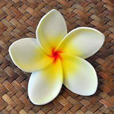Blüten Kunstblumen Plumeria Frangipani weiß gelb