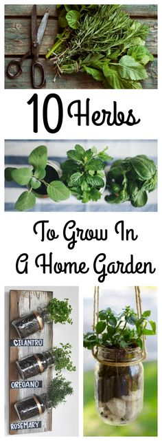Herbs To Grow In The Garden That Will Make All Your Neighbors Jealous