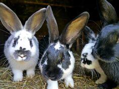 Free Image, Free Photo, Home Pets, Wildlife, Nature, Fauna, Animals