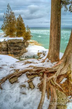 ✯ Cave Point Tree Tentacles - Door County, WI