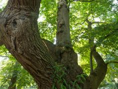 England's Tree of the Year - Woodland Trust