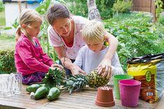 die besten 25 ananas aus blattschopf ziehen ideen auf pinterest ananas pflanzen wachsenden. Black Bedroom Furniture Sets. Home Design Ideas