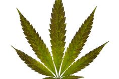 Marijuana: Facts About Cannabis