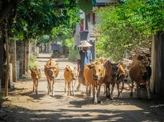 Gili Trawangan #Lombok