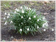 Pierwsze oznaki wiosny :) /First sign of spring & Share Week 2017
