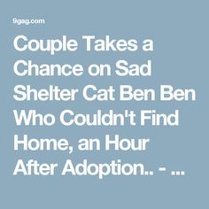 Couple Takes a Chance on Sad Shelter Cat Ben Ben Who Couldn't Find Home, an Hour After Adoption.. - 9GAG