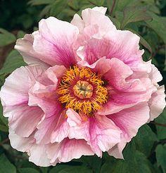 Brabourne Farm: Love .... Pink Petals