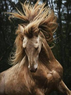 #HORSE##CUT##PETS# #ANIMALS#