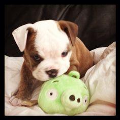 He loves his piggy :)