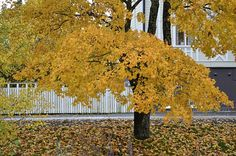 Syksyä Vaasassa Autumn Photos, Fall Cover Photos, Autumn Pictures