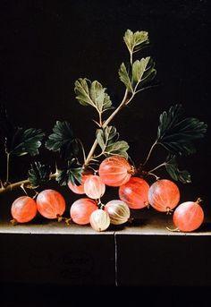 Groseilles à maquereau sur un coin de table (1701) - Adriaen Coorte (vers 1665-après 1707)