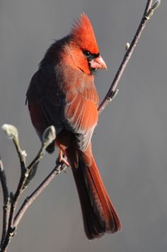 The Great Backyard Bird Count is an annual four-day event that engages bird watchers of all ages in counting birds to create a real-time snapshot of where the birds are.