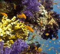 The Red Sea Reef stretches over 1,240 miles along the coast of Egypt, Sudan, and Eritrea. There are more than 1,100 species of fish that call this Red Sea Reef home and nearly 10% of these are exclusive to this region. The reef features include abundant aquatic life, platforms, lagoons, and cylinders.
