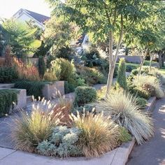 water wise front yard landscaping california - Google Search